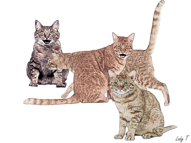 Artwork picture : Teresa Little, Cats A