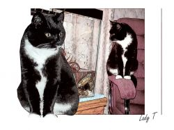 Artwork preview : Prints, Lucy the cat